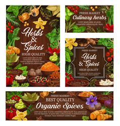 Spices culinary herbs and fresh food seasonings vector