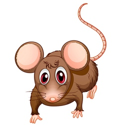 A front view of the brown rat vector image