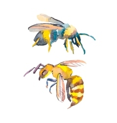 Bee isolated on white background Watercolor vector