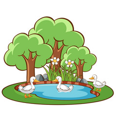Isolated scene with ducks in pond vector