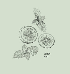 lemon lime and mint ink sketch set vector image