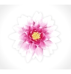 pink flower isolated EPS10 vector image