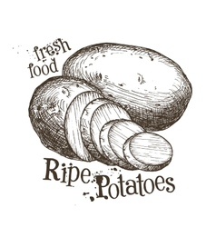 Ripe potatoes logo design template fresh vector