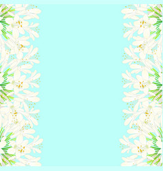 Snow white agapanthus border - lily of the nile vector