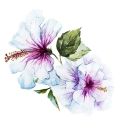 Watercolor hibiscus flower vector