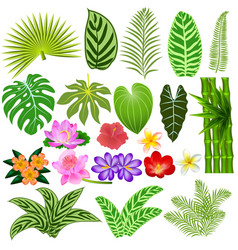 a set tropical leaves and flowers on a white vector image