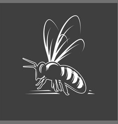Bee isolated on black background vector