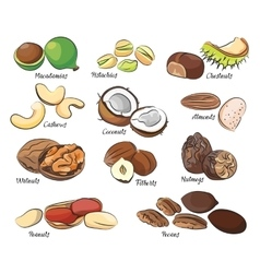 Collection of different nuts vector