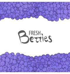 Fresh blueberries vector