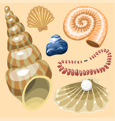 Sea marine animals and shells souvenirs cartoon vector