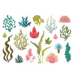 Seaweeds underwater ocean plants sea coral vector