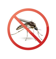 stop sign on mosquito vector image vector image