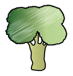 Broccoli fresh vegetable icon vector