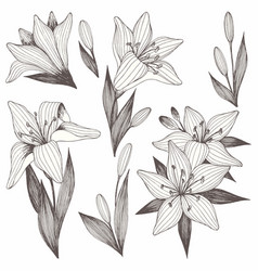 Flowers hand drawing set of for printing vector