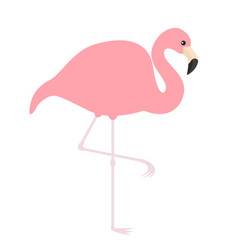 pink flamingo icon exotic tropical bird zoo vector image