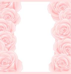 pink rose border vector image