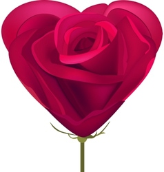 Heart made of red rose vector image vector image
