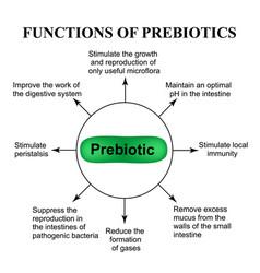 functions of prebiotics infographics vector image