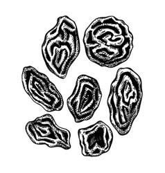 Hand drawn dried grapes - raisin sketches set vector