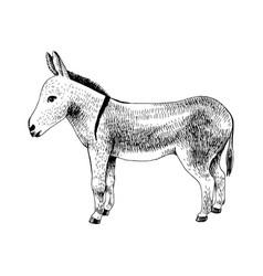 Hand drawn donkey farm animal vector