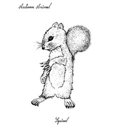 Hand drawn of autumn squirrel on white background vector