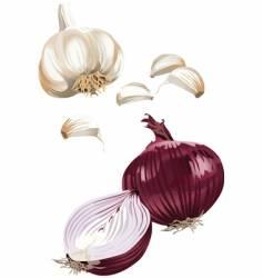 onion garlic vector image vector image
