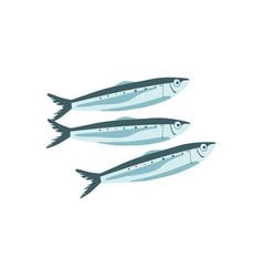 Commercial fish species set vector