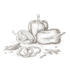 Hand drawn peppers vector image