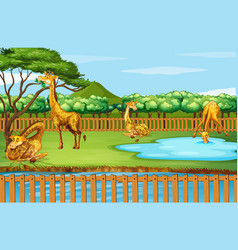 scene with many giraffes at zoo vector image
