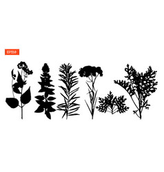 set silhouettes of wild flowers vector image
