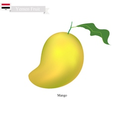 Fresh Mango A Famous Fruit in Yemen vector image