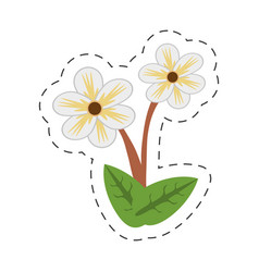cartoon jasmine flower image vector image