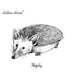 Autumn animal hand drawn hedgehog isolated on vector
