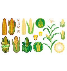 corn icons set - grain or seed stalk vector image