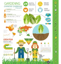 Gardening work farming infographic Chinese cabbage vector image