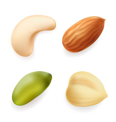 Nuts set hazelnut pistachio almond cashew vector