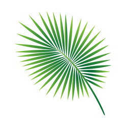 tropical palm leaf isolated on white background vector image