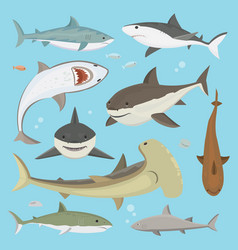 shark big hunter monster different pose set vector image vector image