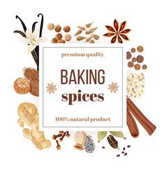 Backing spices big set under squire emblem vector