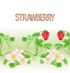 border seamless background of strawberries vector image