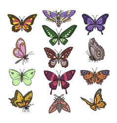 butterfly colorful insect flying vector image