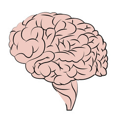 Human brain organ think health vector