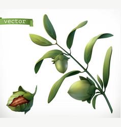 jojoba 3d realistic icon vector image