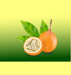 Passion fruit isolated fruit vector