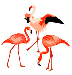 Set of flamingo tropical bright abstract birds vector