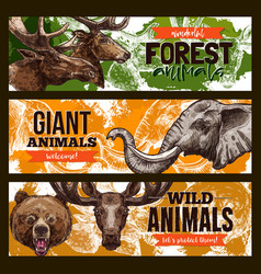 Wild animals zoo or save animal banners vector