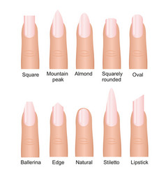 set of different nails shape vector image