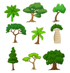 tree cartoon collections vector image
