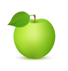 apple fruit green color realistic icon vector image