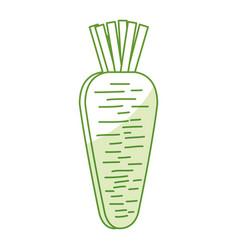 Carrot fresh vegetable icon vector